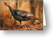 Landscape Greeting Cards - Wild Turkey Greeting Card by Hans Droog