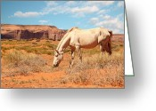 Quarter Horse Greeting Cards - Wild white horse Greeting Card by Isabel Poulin