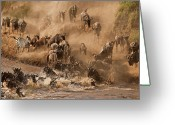On The Move Greeting Cards - Wildebeest And Zebra Greeting Card by Marsch1962UK