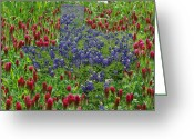 Texas.photo Photo Greeting Cards - Wildflower Illusions Greeting Card by Robyn Stacey