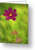 Wildflower Photography Greeting Cards - Wildflower Greeting Card by Image by Rebecca Weaver, RWeaverNest Photography