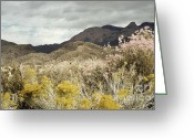 Mountains New Mexico Greeting Cards - Wildflower Mountain Greeting Card by Andrea Hazel Ihlefeld