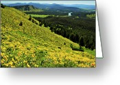 Wildflower Photography Greeting Cards - Wildflower Mountain In Wyoming Greeting Card by Jeff R Clow