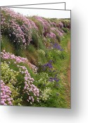 Endymion Greeting Cards - Wildflowers Along A Coastal Bank Greeting Card by Dr Keith Wheeler