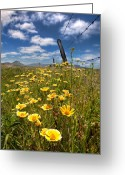 Barbed Wire Greeting Cards - Wildflowers and Barbed Wire Greeting Card by Peter Tellone