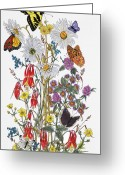 Buttercups Greeting Cards - Wildflowers and Butterflies of the Valley Greeting Card by Constance Widen