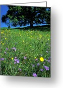 Purples Greeting Cards - Wildflowers and the Oak Greeting Card by Kathy Yates