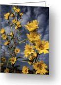 Midwestern States Greeting Cards - Wildflowers Blooming On The Kansas Greeting Card by Jim Richardson