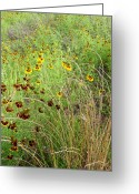 Texas Wildflowers Greeting Cards - Wildflowers Eight Greeting Card by Stephen Anderson