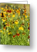 Texas Wildflowers Greeting Cards - Wildflowers Four Greeting Card by Stephen Anderson