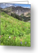 Mountainous Greeting Cards - Wildflowers in Albion Basin Greeting Card by Utah Images