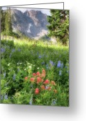 Spectacular Greeting Cards - Wildflowers in Albion Basin Utah Greeting Card by Utah Images