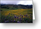 Landscapes Framed Prints Greeting Cards - Wildflowers in Fog 2 Greeting Card by Kathy Yates