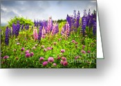 Lupines Greeting Cards - Wildflowers in Newfoundland Greeting Card by Elena Elisseeva