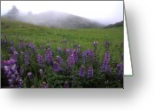 Lupines Greeting Cards - Wildflowers in the Fog Greeting Card by Kathy Yates