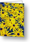 Monopoly Greeting Cards - Wildflowers Greeting Card by James David Mancini