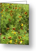 Texas Wildflowers Greeting Cards - Wildflowers Nine Greeting Card by Stephen Anderson