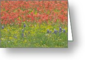 Texas.photo Photo Greeting Cards - Wildflowers of Texas Greeting Card by Shawn Hughes