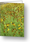 Texas Wildflowers Greeting Cards - Wildflowers One Greeting Card by Stephen Anderson