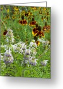 Texas Wildflowers Greeting Cards - Wildflowers Seven Greeting Card by Stephen Anderson
