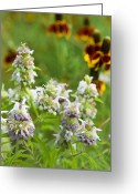 Texas Wildflowers Greeting Cards - Wildflowers Three Greeting Card by Stephen Anderson