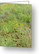 Texas Wildflowers Greeting Cards - Wildflowers Two Greeting Card by Stephen Anderson