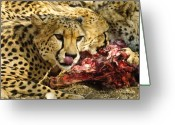 Feed Greeting Cards - Wildlife - Lunchtime Greeting Card by Andy-Kim Moeller
