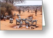 African Wildlife Greeting Cards - Wildlife at the Watering Hole Greeting Card by Marion McCristall