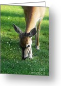 Janie Greeting Cards - Wildlife Beauty Greeting Card by Janie Johnson