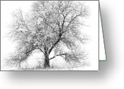 Lake Greeting Cards - Willow And Blizzard Greeting Card by Altus Photo Design