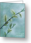 Spring Time Greeting Cards - Willow Catkins Greeting Card by Priska Wettstein