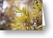 Reds Of Autumn Greeting Cards - Willow in Autumn Greeting Card by Steven Poulton