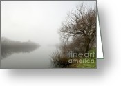 David Lade Greeting Cards - Willow in fog Greeting Card by David Lade