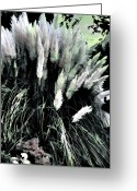 Willows Digital Art Greeting Cards - Willows Greeting Card by Tom Prendergast