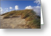 Dune Grass Greeting Cards - Wind Blown Grass Tussocks Precariously Greeting Card by Jason Edwards