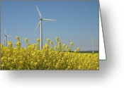 Horizon Over Land Greeting Cards - Wind Turbines Across A Field Of Flowering Oilseed Rape (brassica Napus) Greeting Card by Maria Jauregui Ponte