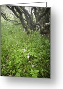 Blue Ridge Photographs Greeting Cards - Windblown Grassy Craggy Greeting Card by Rob Travis