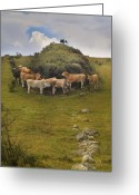 Fyn Greeting Cards - Windbreak Greeting Card by Robert Lacy