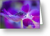 Caen Greeting Cards - Windflower Greeting Card by Jacky Parker