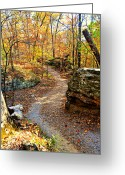Marty Koch Greeting Cards - Winding Trail Greeting Card by Marty Koch