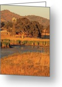 Tuolumne Greeting Cards - Windmill and Oak Tree Greeting Card by Troy Montemayor