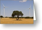 Windmill And Tree Greeting Cards - Windmills Greeting Card by Miguel Pereira