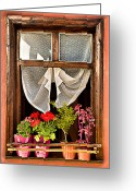 Planter Greeting Cards - Window Greeting Card by Okan YILMAZ