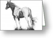 Wild Horse Drawings Greeting Cards - Winds of Change Greeting Card by Marianne NANA Betts