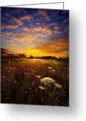 Natural Light Greeting Cards - Windsong Greeting Card by Phil Koch