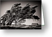 New Zealand Greeting Cards - Windswept Greeting Card by David Bowman