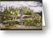 Wood Fences Greeting Cards - Windswept Greeting Card by Joan Carroll