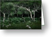 Rain Forrest Greeting Cards - Windswept Greeting Card by Traveler Scout