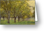 Orchards Greeting Cards - Windswept Orchard Greeting Card by Jan Amiss Photography