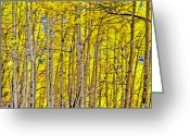 Colorado Mountain Greeting Cards Greeting Cards - Windy Aspen Greeting Card by James Steele